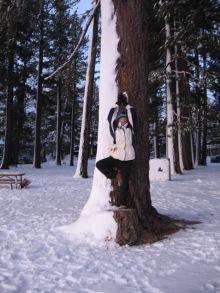 chilly tree, Lake Tahoe, NV