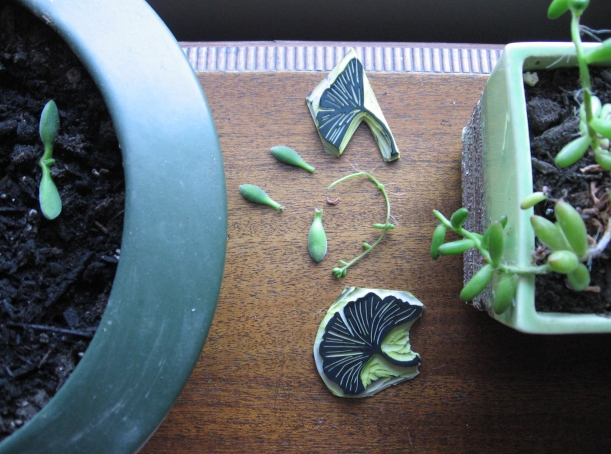 cultivating succulents & making stamps